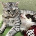 先輩犬・猫とも仲良し♡保護猫カフェで出会った『ラテ』