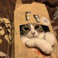 猫が『ズサーッ』としたくなるもの4つ