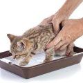猫にトイレのしつけをする時期や方法、おすすめの商品