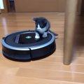 「便利な乗り物見~つけた♪」達人級のルンバ乗り子猫現る!