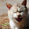 困った猫の「鳴き癖」対処法3つ