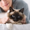 猫のげっぷが出る理由と注意すべき病気について