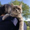 猫に散歩をさせるメリットとデメリットは?方法と注意点も紹介!
