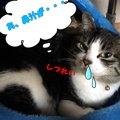 猫の鼻からわかる健康状態と病気のサイン