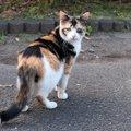 走ってた猫が急に立ち止まるのはなぜ?5つの心理