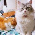 甘えたい猫さん、やきもちをやく猫さん!