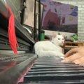 美しいピアノの旋律に乱入する猫…愛溢れる結末とは?