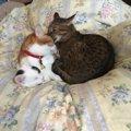 兄弟猫に猫パンチをする愛猫…理由や対処の方法