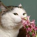 猫が匂いを嗅ぐ時の心理
