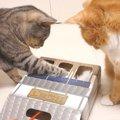 猫ちゃんで変わる猫パンチ