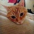 幸せを運ぶ元ノラ猫チャロとの出会い
