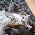 ゴロニャーン。色んな母猫・子猫の声のかけ合いで幸せホルモン垂れ流…