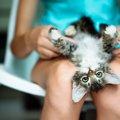 猫が『飼い主の股の間で寝る』心理4選
