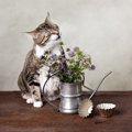 猫がくしゃみをする原因と対策