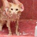 愛猫に人間用のシャンプーを使ってもいい?