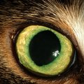 『瞳孔が開いている猫』に絶対しちゃダメな行動5つ