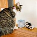 【話題】サイズ感がおかしい…「巨大すぎる猫さん」にネット民騒然