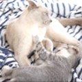 兄の愛は一方通行…やんちゃな子猫ちゃんは今日も元気いっぱい!