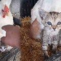 鶏舎から子猫たちの鳴き声...心温まる展開に感動!