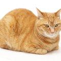 茶トラはどんな猫?1番人気の雑種、その人気の秘密を探れ!