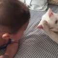 猫と赤ちゃんの頭がごっつんこ!それでも猫さんは優しかった!