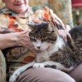 老猫ホームの内容とそのオススメの理由とは