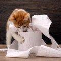 子猫が下痢をしたら受診した方が良い?原因や対処法をチェック!!