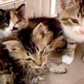 保健所前に子猫を遺棄…動物との共生に募る切実な思いとは?
