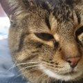 愛猫の長生きを思うなら!「ロイヤルカナンpHコントロール」