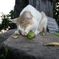 猫にきゅうりを食べさせても大丈夫?注意する事や与え方、その効果