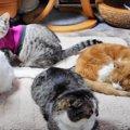 集まりたい!くっつきたい!みんなで過ごす猫ちゃんたち♡
