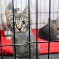 猫シェルターにおける日本と海外との違い