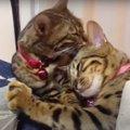 みんなに甘える猫さん!本当はママ猫に一番甘えたい♡