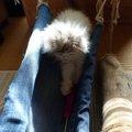 愛猫に流木でハンモックを作ってみた!