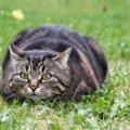 猫が『おしりふりふり』をするのはなぜ?4つの理由