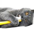 猫の歯の基礎知識とケアの方法について
