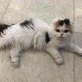 後ろ足が変形してトコトコ…歩きにくそうだった保護猫と家族になって