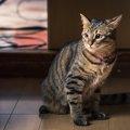 ワンルームで猫と快適に暮らすための7つの方法!