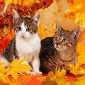 猫の危険な『秋バテ』とは?絶対見逃しNGな症状や予防策3つ