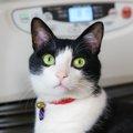 猫がストーブで焦げる・火傷をする!予防する方法や注意点