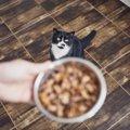 ご飯への執着が異常…猫の食欲増加で考えられる病気4つ