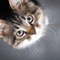 猫が体をこすりつける8つの理由