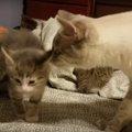 子猫と対面した先輩猫の戸惑う姿に胸キュン