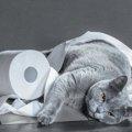 猫の「不適切な排泄」とは?獣医が教える正しい対処方法と解決への考…