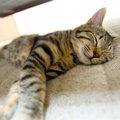 猫種によってかかりやすい病気が違う!あなたの猫種は大丈夫?