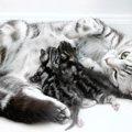 猫の出産の過程と注意点について