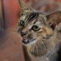 猫もストレスで吐く事がある!原因や対処法
