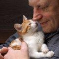 猫嫌いを克服するには?6つの克服法