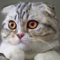 キャットイシューとは?猫好きクリエイターの活動内容