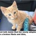 母猫は、負傷した子猫を信頼した人に託しました...